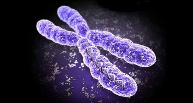 İkinci Kromozom Nedir? | iQHaber | Zekası Yüksek Sosyal içerik Sitesi